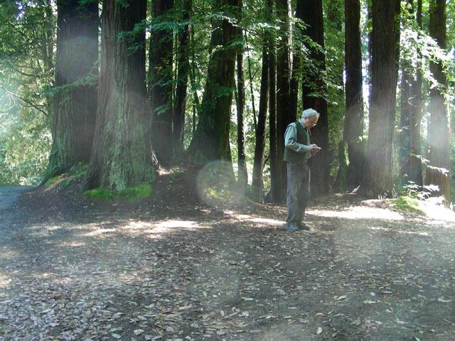 Kmaf11-redwoods